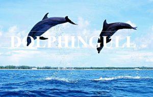 [TNR-017]   Dolphin or Seagull / DOLPHINGULL