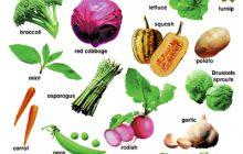 [TNR-063] The Vegetables 「Vegetable Hotel」